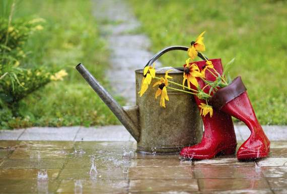 How to save your garden after your summer holiday