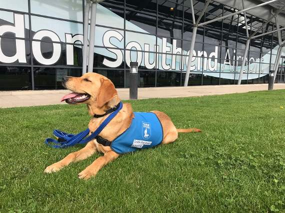 Guide dog puppies head to London Southend Airport as a vital part of their training
